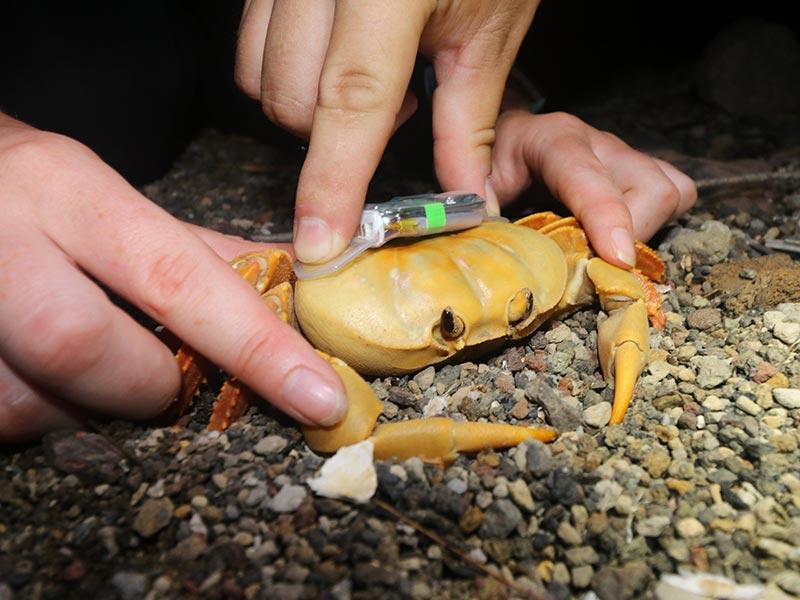 Crab Team